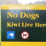 No dogs kiwis live here